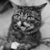 Умерла кошка-мем Лил Баб, сотрудничавшая с Andrew W.K. и Run the Jewels (Видео)
