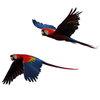 Джими Хендрикс и Джордж Майкл оказались невиновны в росте популяции диких попугаев в Британии