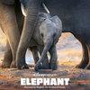 Меган Маркл и Натали Портман озвучили фильмы Disney о дикой природе (Видео)