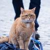 Умер уличный кот по имени Боб