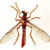 Австралийские насекомые стали супергероями вселенной Marvel