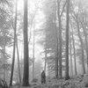 Рецензия: Тейлор Свифт - «Folklore»