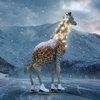 Первый канал встретит Новый год с жирафами