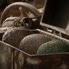 «Фаберже» отметит 10-летие «Игры престолов» выпуском драконьего яйца (Видео)