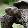 Леонардо ДиКаприо будет спасать черепах и игуан на Галапагосских островах (Видео)